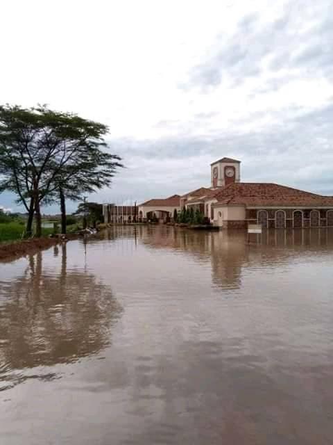 invasive plant triggers catastrophy in Uganda and Kenya Serena